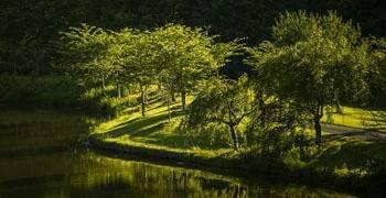 Trees overlooking lake in Virginia