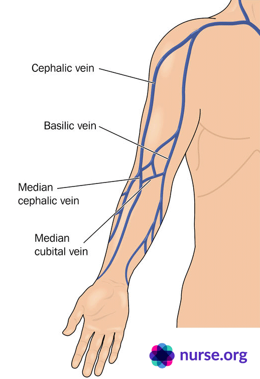Depiction of upper body and veins for drawing blood