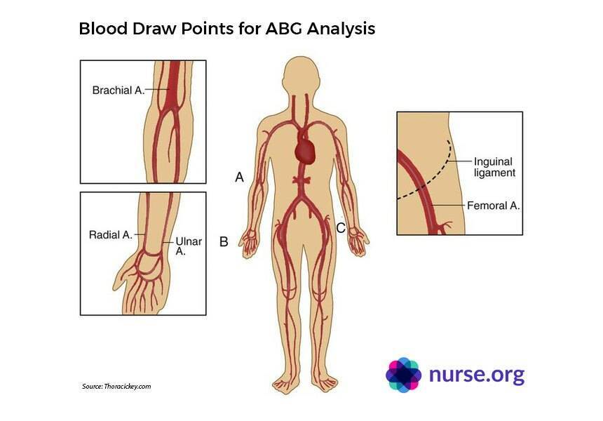 Diagram showing various blood draw points on human body